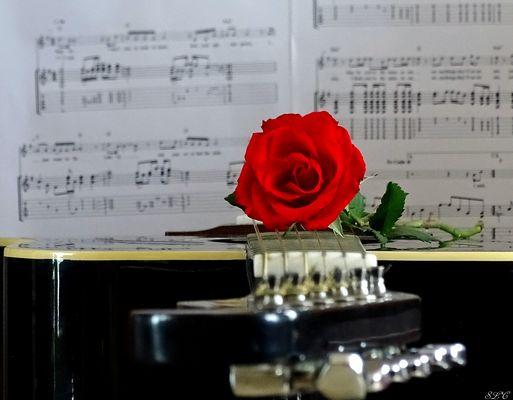 Bonne Saint -Valentin !
