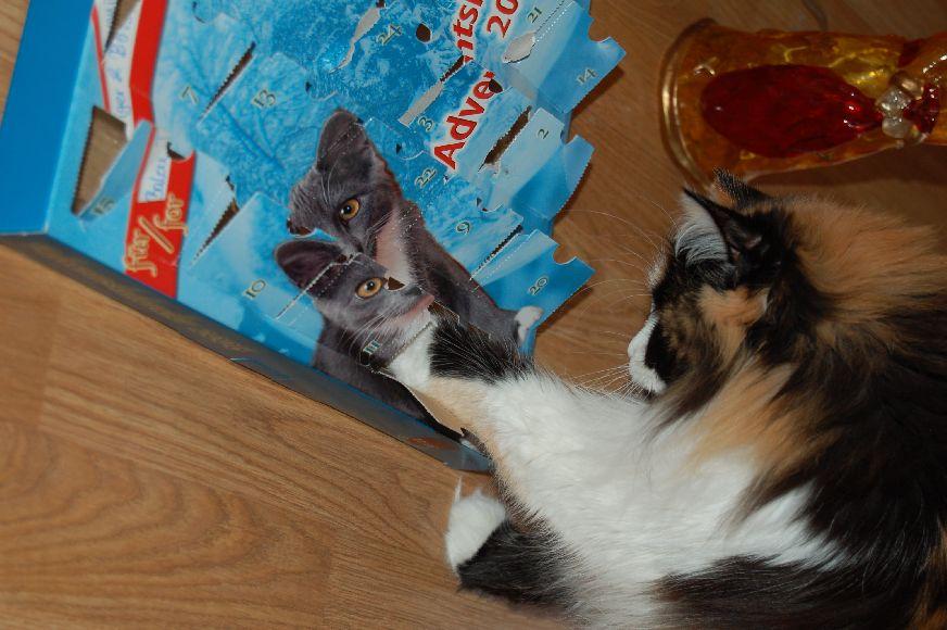 Bonny und ihr Adventskalender