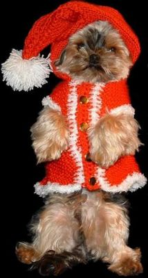 Bonny wünscht Frohe Weihnachten