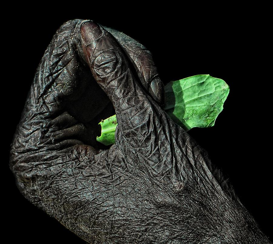 BONOBO-HAND