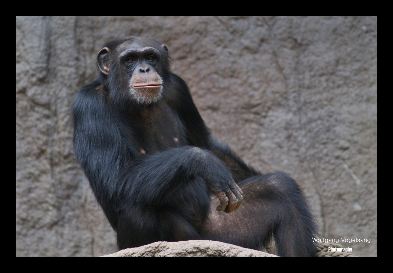 ...Bonobo-Posing...