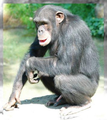 Bonoboferkelakt!
