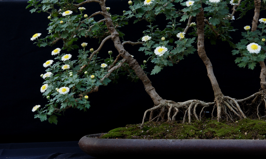 Bonsai flower