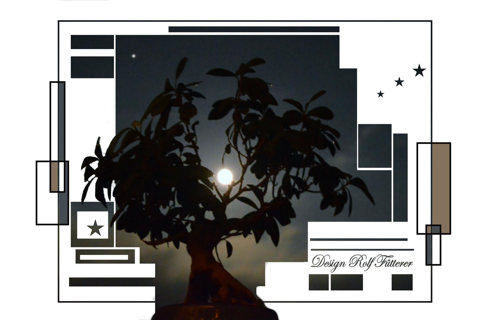 Bonsai im Mondlicht