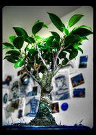 Bonsai (zu hell, weil der monitor zu dunkel war)