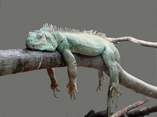 bonsoir à toutes et tous, je suis fatigué !!!!!