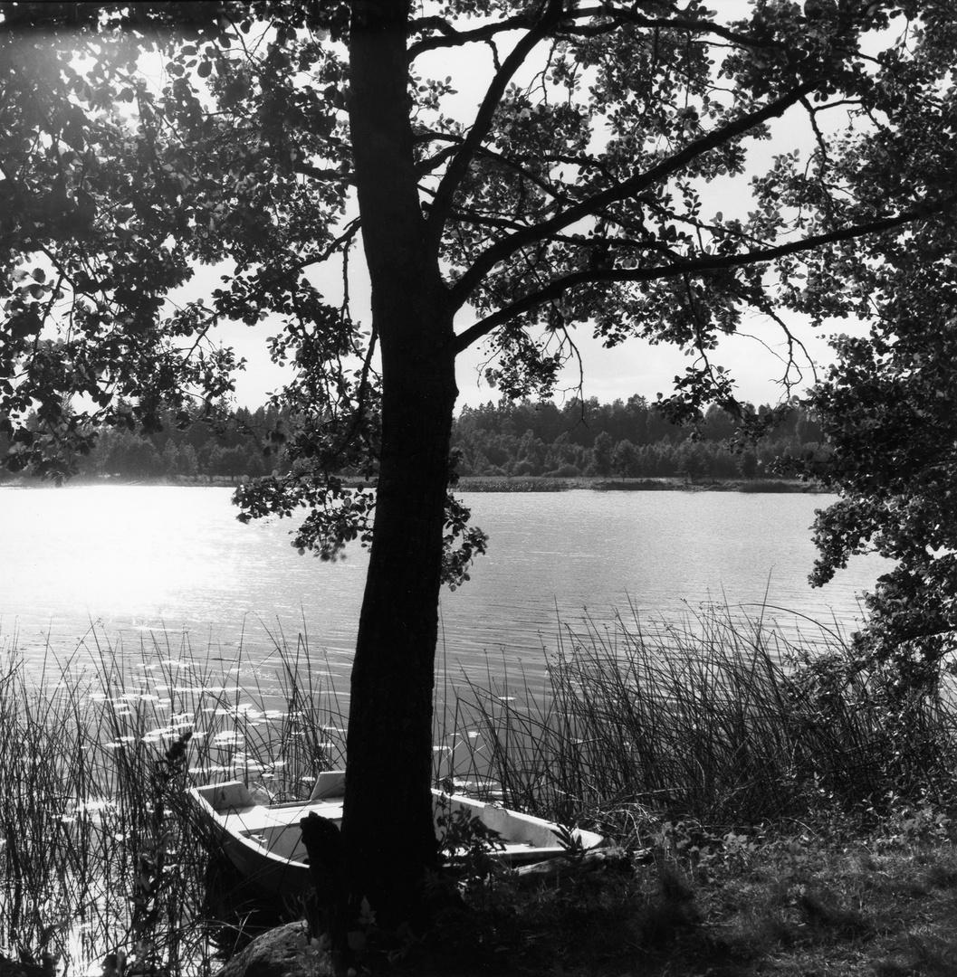 Boot an einem Baum am See bei Horndal, 1996