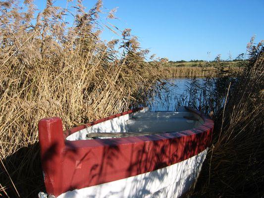 Boot im Schilf -Dänemark nähe Bork Havn