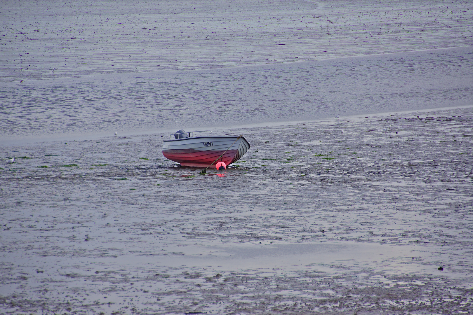 Boot im Watt