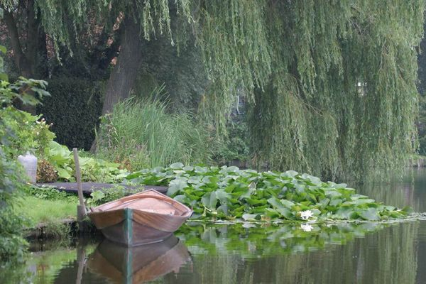 boot met waterlelies