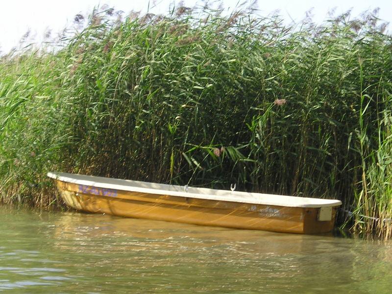 Boot vor Schilff an der Mueritz