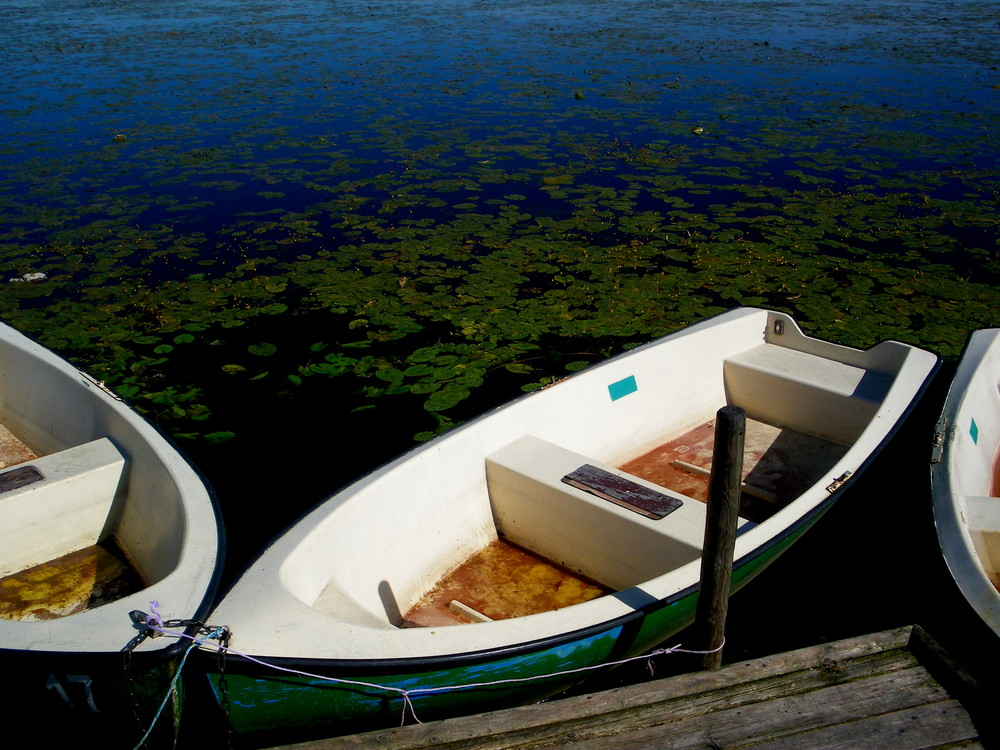 Boote am Federsee