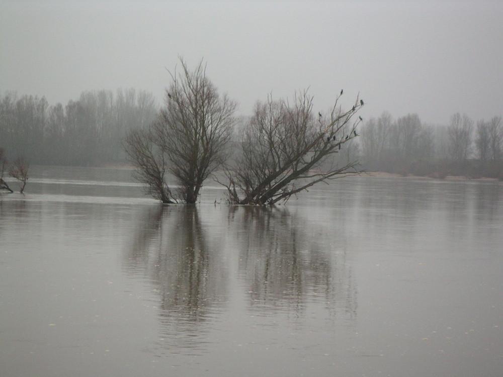 Bord de Loire au petit matin