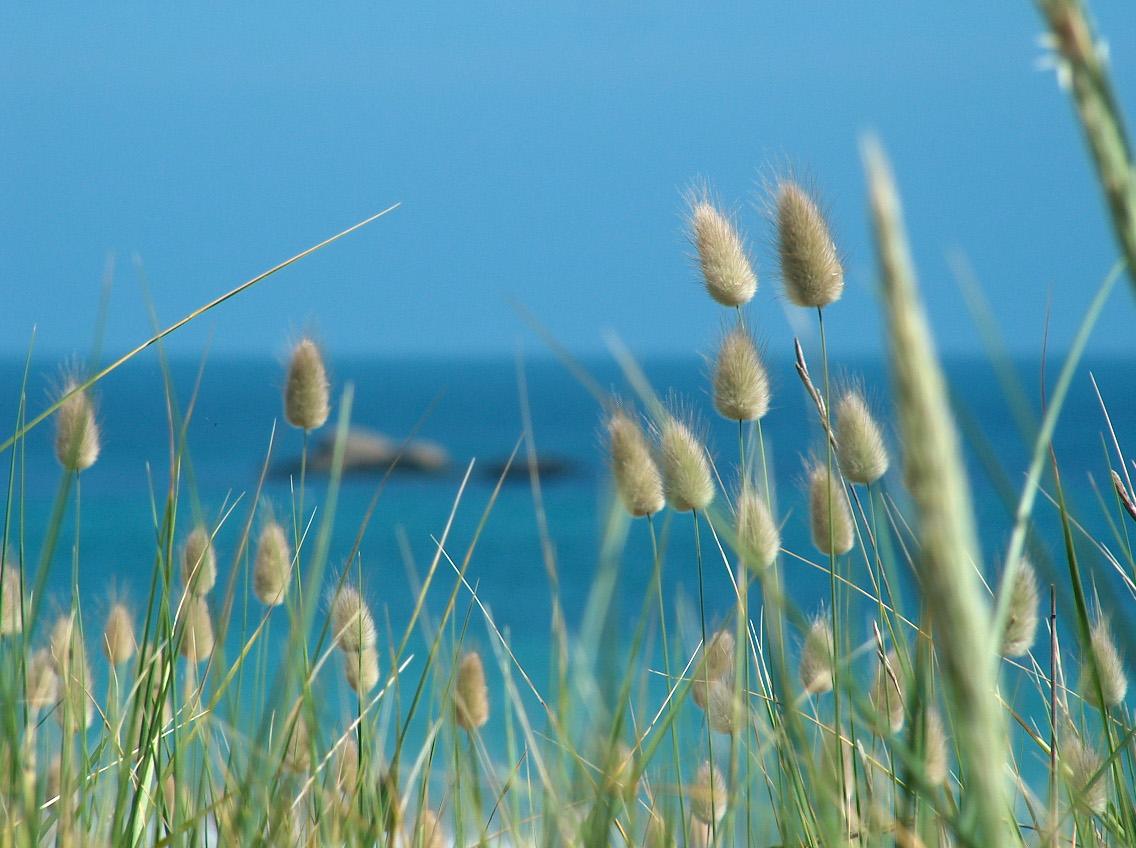 Bord de mer toujours côté Renouveau jour de soleil