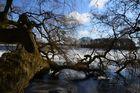 Bordesholmer See mit Seebaum