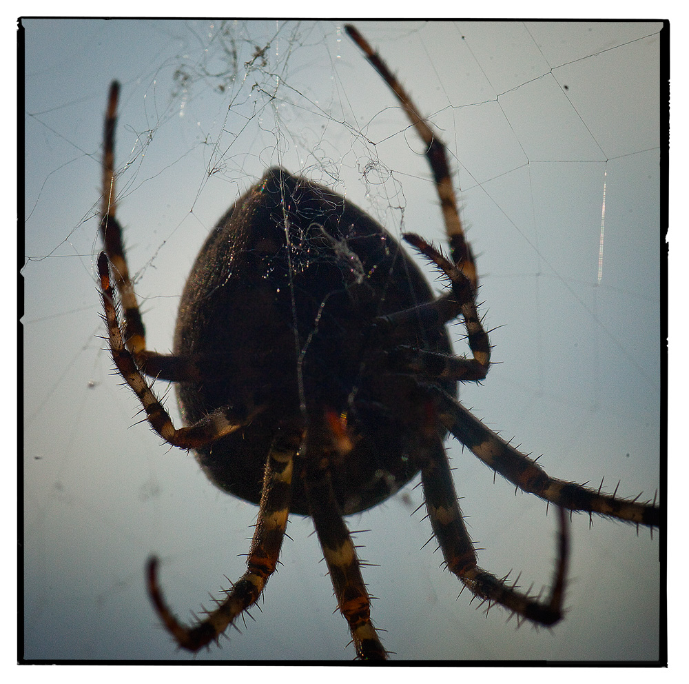 Boris, the messy spider
