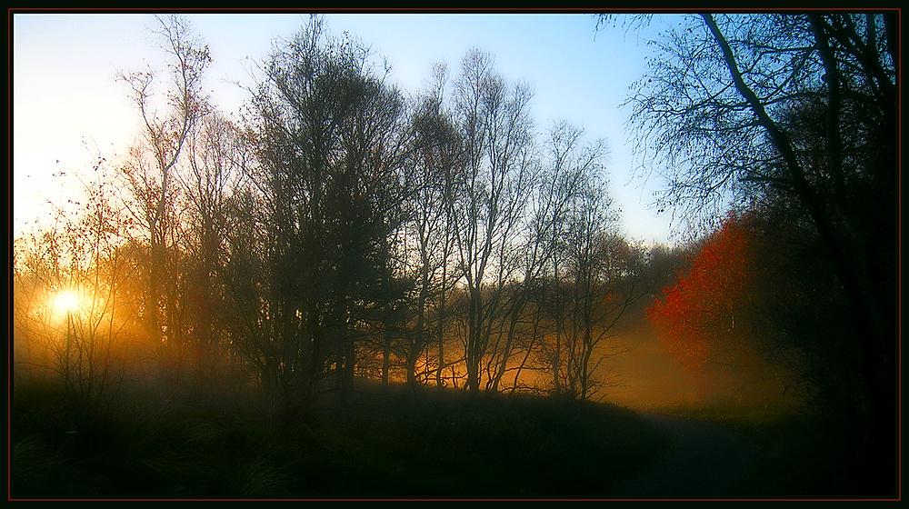Borkumer Waldweg am Morgen