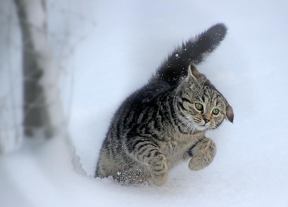 Borstie im Schnee