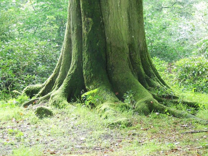 Bos van Ype