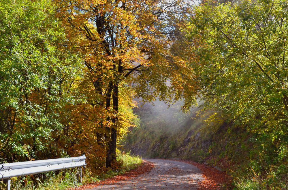 bosco in autunno