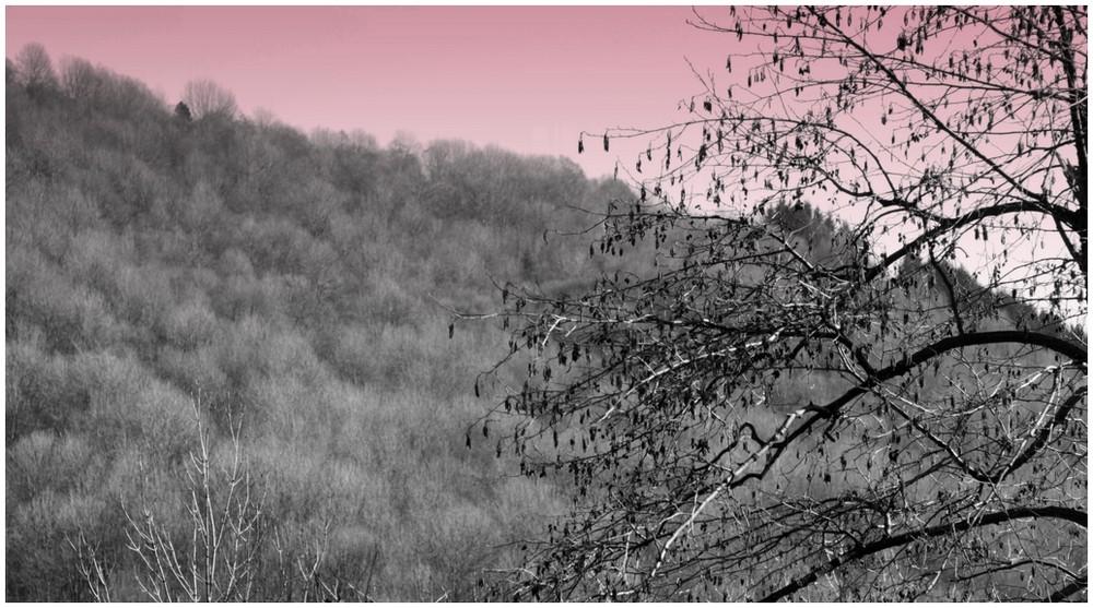 bosco invernale