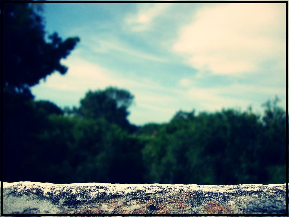 Bosque Borroso...