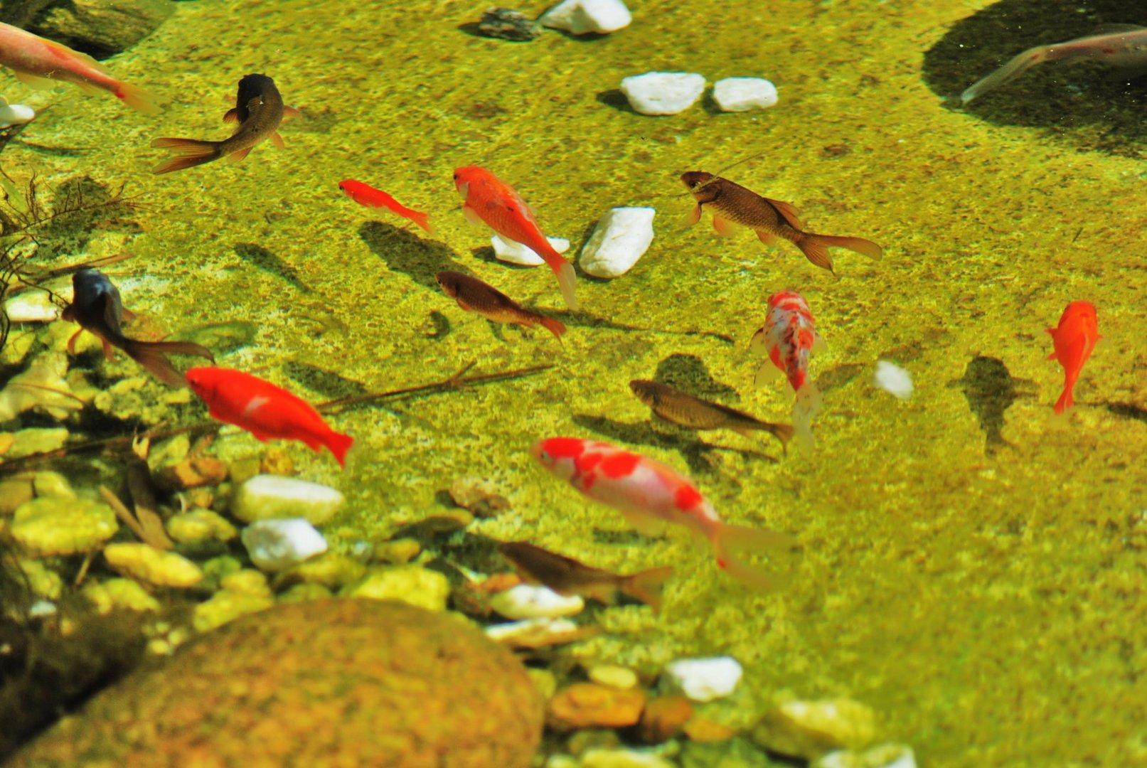 bosque con encanto ( vigo ) el estanque ii