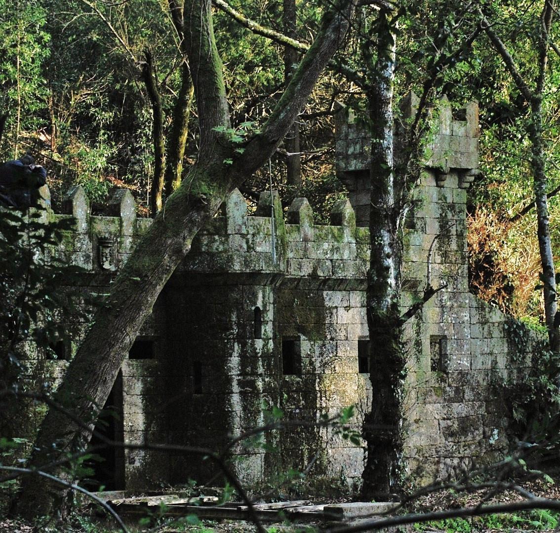 bosque con encanto ( vigo ) II
