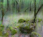 bosque de Ucieda