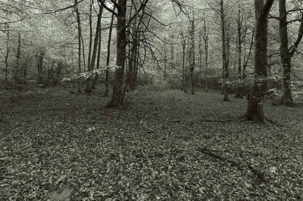 Bosque en B&N
