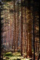 Bosque en Inverness, Escocia