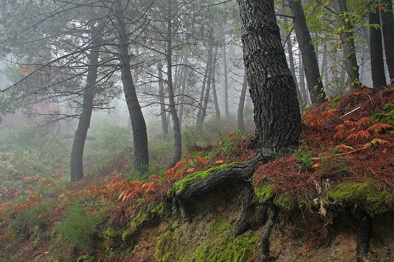 Bosque en Niebla