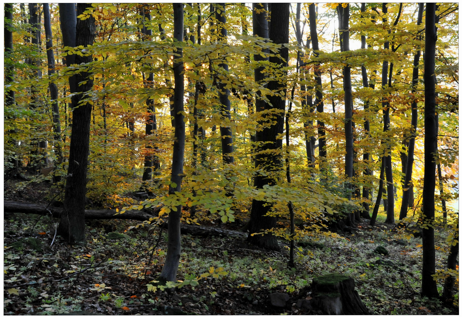 Bosque en otoño IV (Wald im Herbst IV)