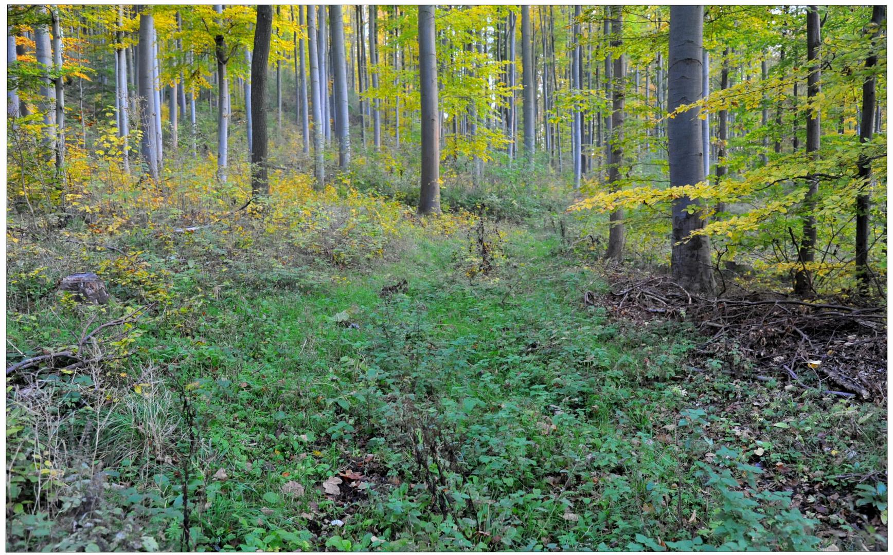 Bosque en otoño V (Wald im Herbst V)