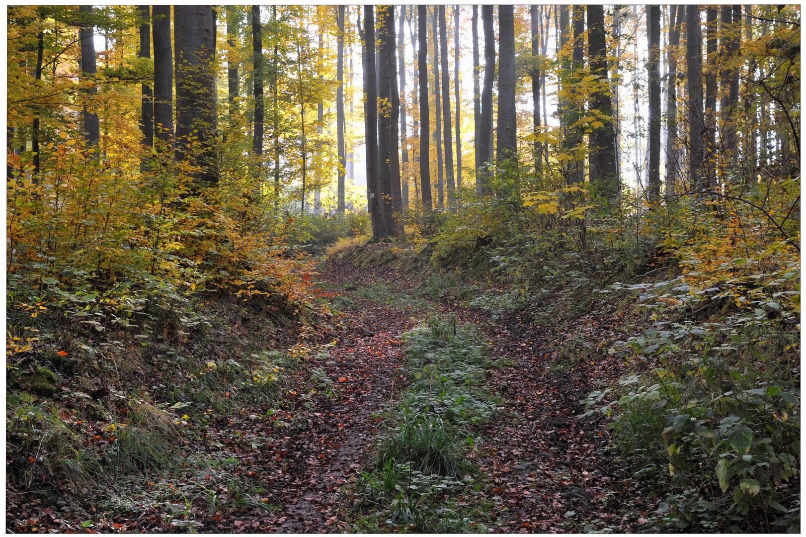 Bosque en otoño VI