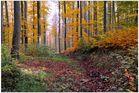 Bosque en otoño VII