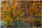 Bosque en otoño VIII