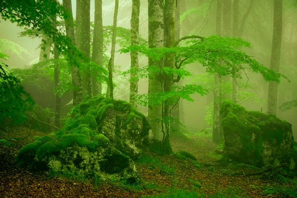 Bosque encantado.