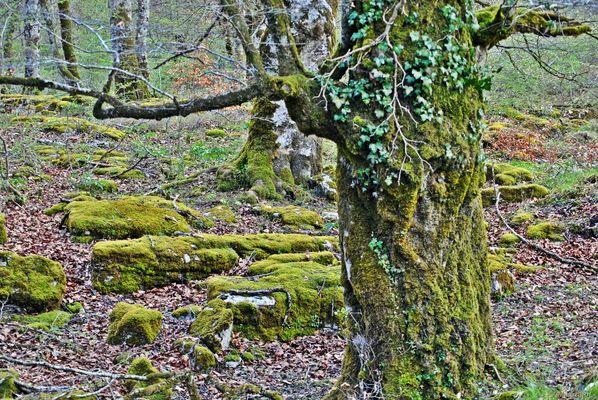 Bosque humedo