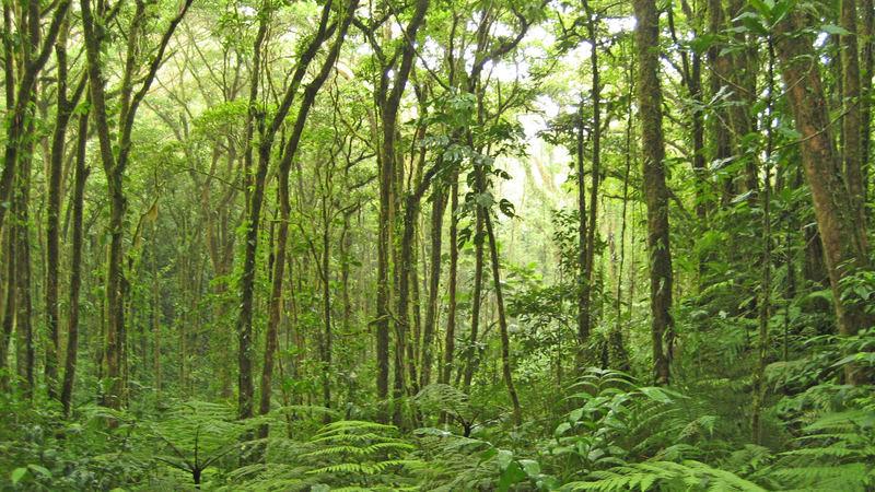 bosque lluvioso - regenwald Costa Rica