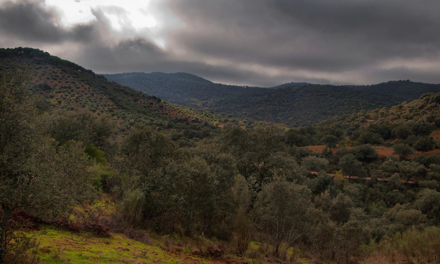 BOSQUE MEDITERRÁNEO (2011 año internacional de los bosques)