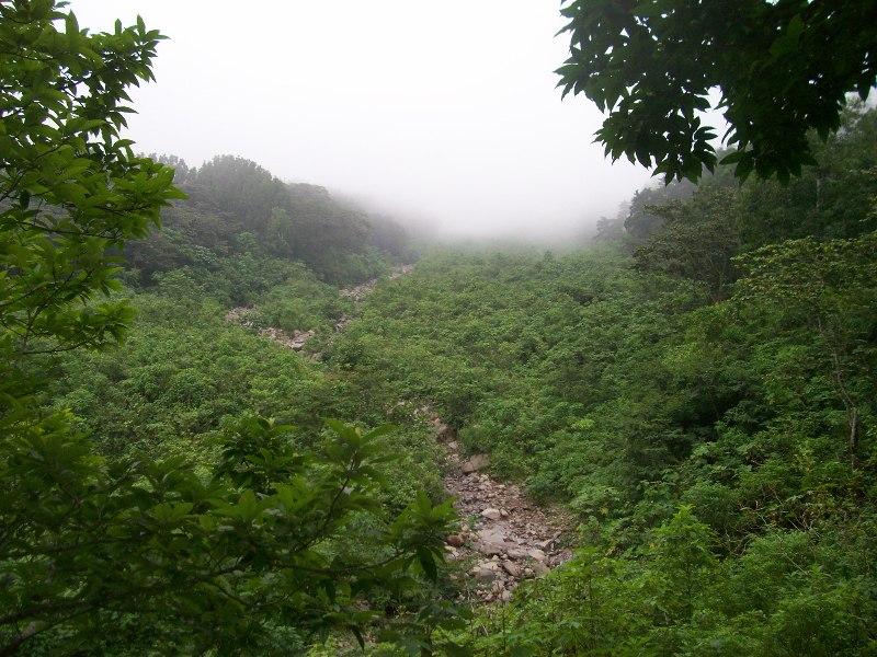 Bosque Nuboso en Finca la Florida, Pochuta, CHimaltenango, Guatemala