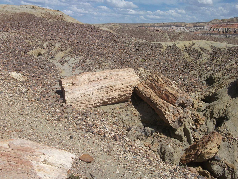 Bosque Petrificado - Sarmiento Chubut