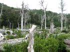 Bosque - Pucon