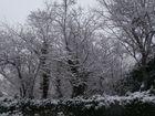 bosques nevados