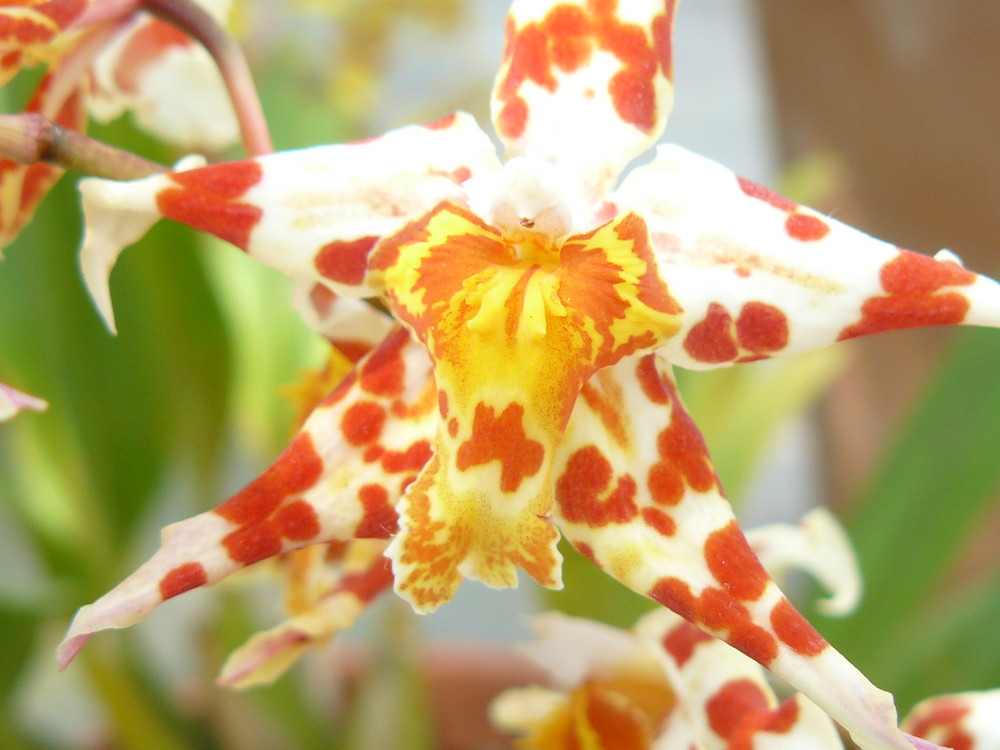 Botanic