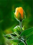 BOTANIC - Flor