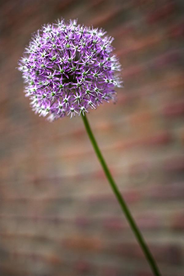 Botanic Garden - Unknown Flower