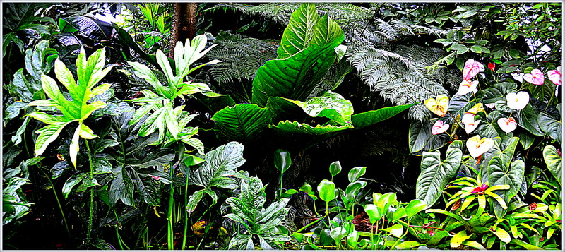 Botanic Garden;SG;CH