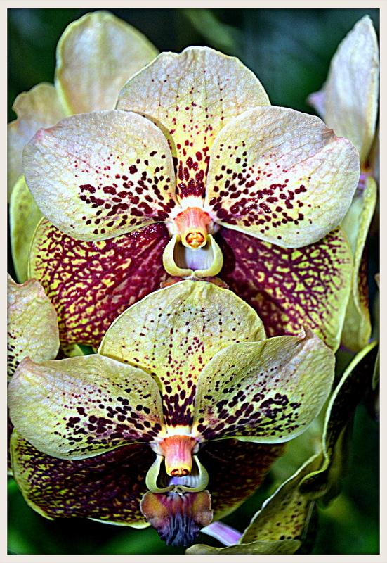 Botanic VII